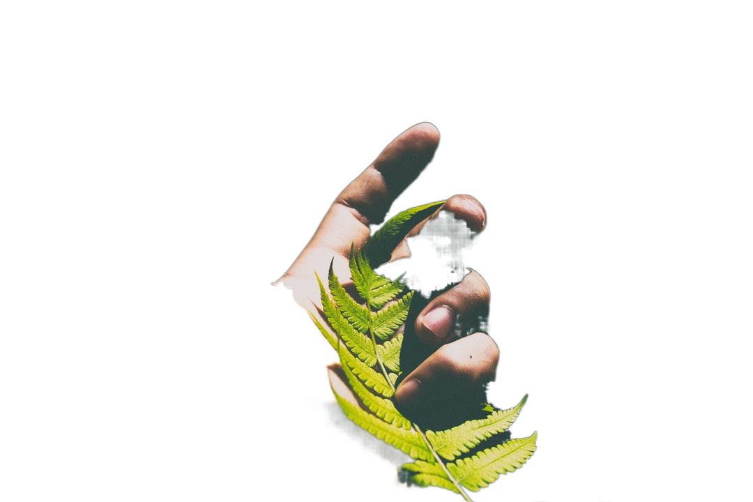 person holding green leaves