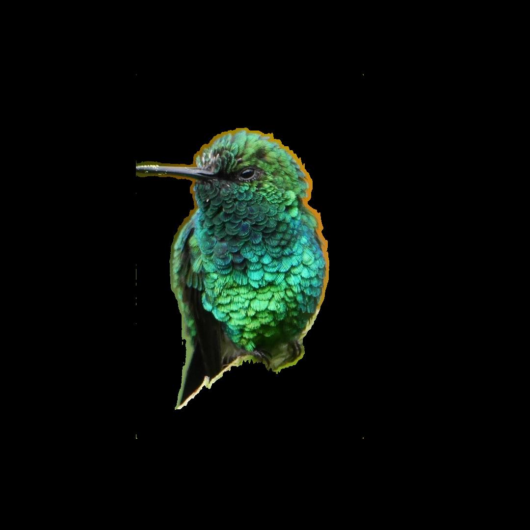 shallow focus green bird