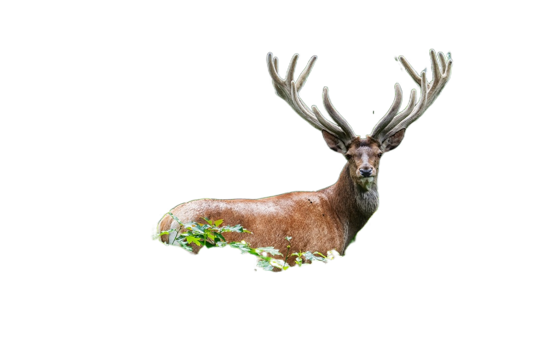 brown deer on grass area