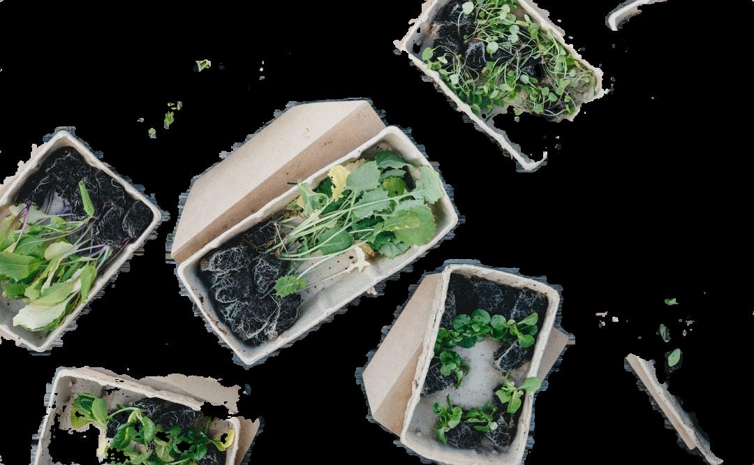 green leaves on white ceramic bowls